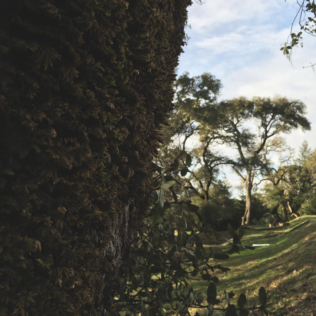 Demuth Vineyard Trees.