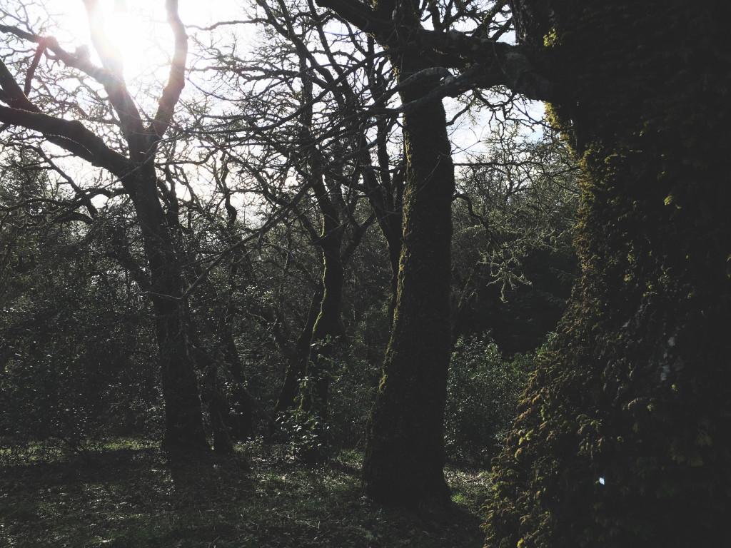 Demuth Vineyard Winter Light.