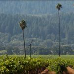 The Three Palms Vineyard