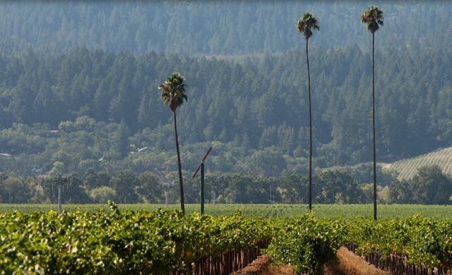 The Three Palms Vineyard